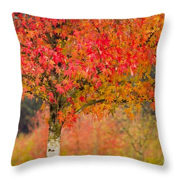 Autumn Fire Throw Pillow by Sonya Lang