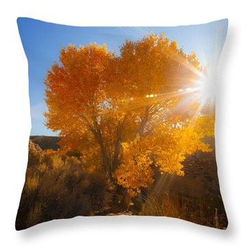 Autumn Golden Birch Tree In The Sun Fine Art Photograph Print Throw Pillow