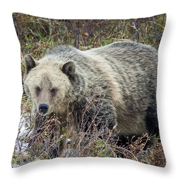 Throw Pillow featuring the photograph Autumn Grizzly by Jack Bell