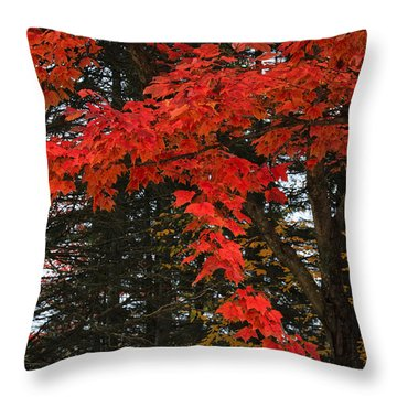 Throw Pillow featuring the photograph Autumn In Algonquin 3 by Gary Hall