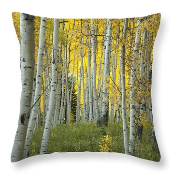 Autumn In The Aspen Grove Throw Pillow