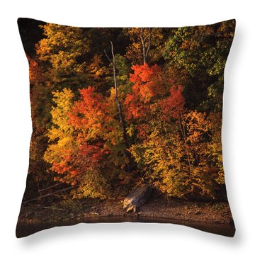 Autumn In The Ozarks Throw Pillow