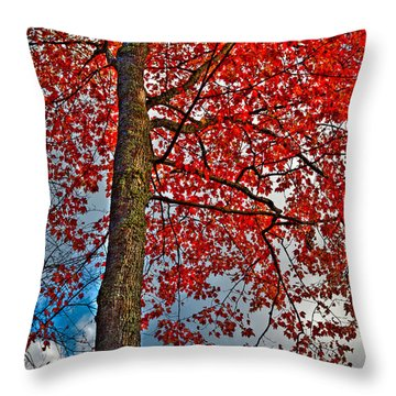 Autumn In The Trees Throw Pillow by David Patterson