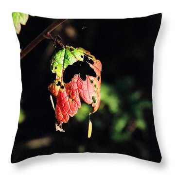 Throw Pillow featuring the photograph Autumn Leaf by Cathy Mahnke