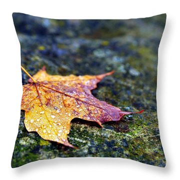 Autumn Leaf On Rocky Ledge Throw Pillow by Terri Gostola