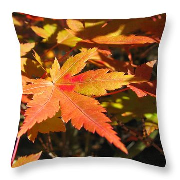 Throw Pillow featuring the photograph Autumn Leaves 9 by Brooks Garten Hauschild
