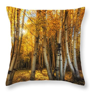 Autumn Light Throw Pillow by Rick Furmanek