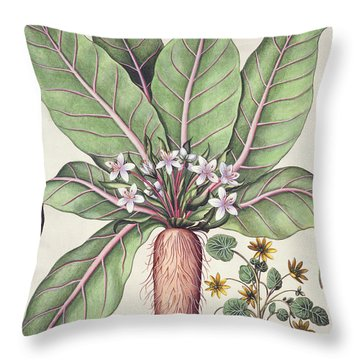 Autumn Mandrake Throw Pillow
