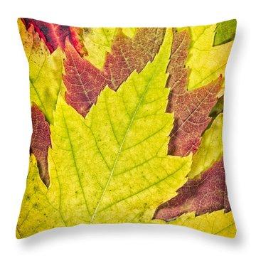 Autumn Maple Leaves Throw Pillow by Adam Romanowicz