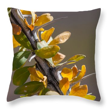 Autumn Ocotillo Throw Pillow by Beverly Parks
