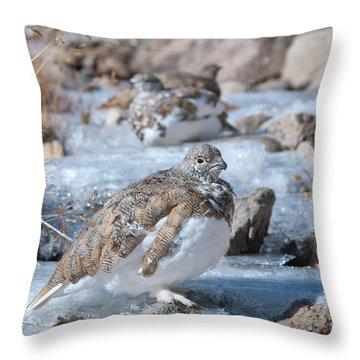 Autumn Plumage White-tailed Ptarmigan Throw Pillow