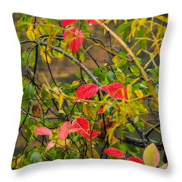 Autumn Rain Throw Pillow
