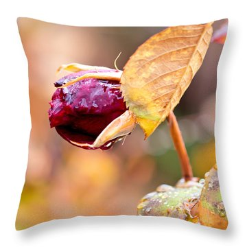 Throw Pillow featuring the photograph Autumn Rosebud by Rona Black
