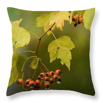 Autumn Showers Throw Pillow by Fraida Gutovich