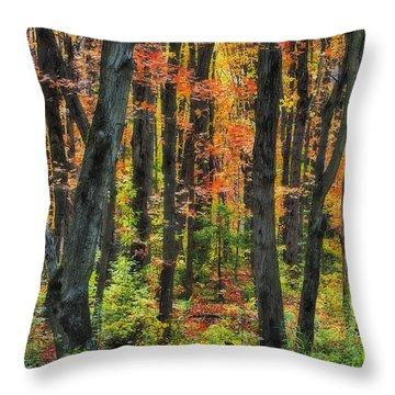 Autumn Sugar Maple, Yellow Birch And Throw Pillow by Thomas Kitchin & Victoria Hurst