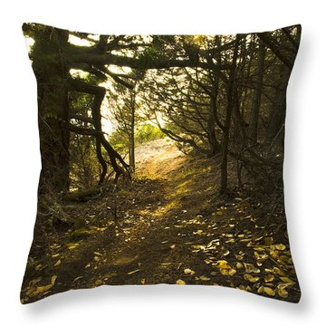 Autumn Trail In Woods Throw Pillow