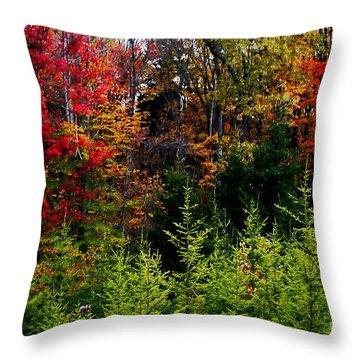 Autumn Tree Foliage Throw Pillow by Lanjee Chee