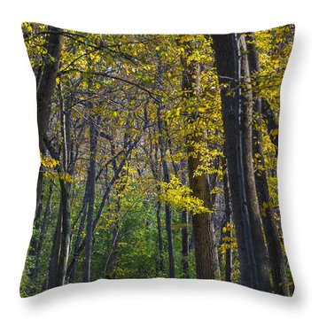 Throw Pillow featuring the photograph Autumn Trees Alley by Sebastian Musial