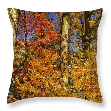 Autumn Trees Throw Pillow