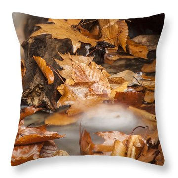 Autumn Water Eddy Throw Pillow by Darleen Stry