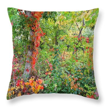 Throw Pillow featuring the photograph Autumn's Rainbow Forest by Diane Alexander