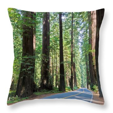 Avenue Of The Giants Throw Pillow by Heidi Smith