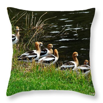 Avocets Throw Pillow
