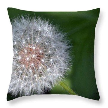 Awaiting The Breeze Throw Pillow
