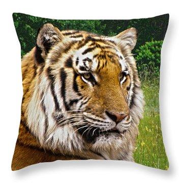 Axl's Portrait Throw Pillow by Sandi OReilly