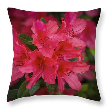 Azaleas 1 Throw Pillow