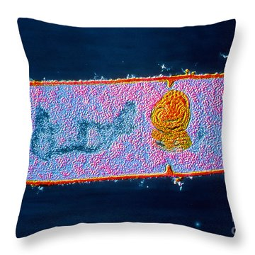 B2200229 - Bacillus Subtilis Tem Throw Pillow by Spl