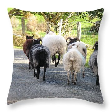 Ba Ba Blacksheep Throw Pillow by Suzanne Oesterling