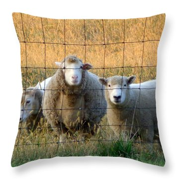 Throw Pillow featuring the photograph Baaaaa by Joseph Skompski