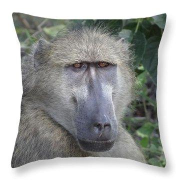 Baboon Portrait Throw Pillow by Bruce W Krucke
