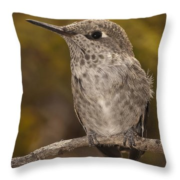 Baby Anna's Hummingbird Throw Pillow