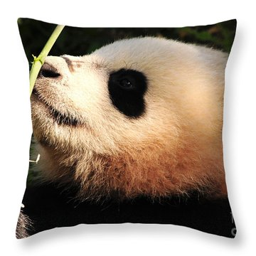 Throw Pillow featuring the photograph Baby Bear Bamboo Inspection by Olivia Hardwicke