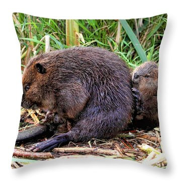 Baby Beaver With Mother Throw Pillow by Peggy Collins