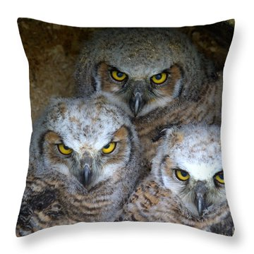 Baby Big Horned Owls Throw Pillow