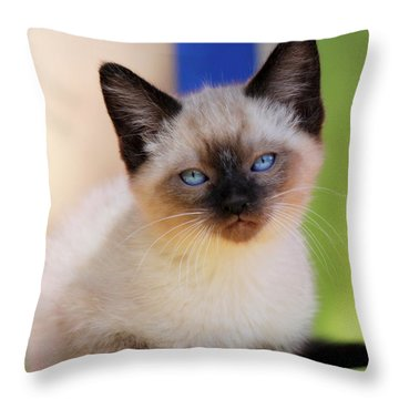 Throw Pillow featuring the photograph Baby Blues by Melanie Lankford Photography