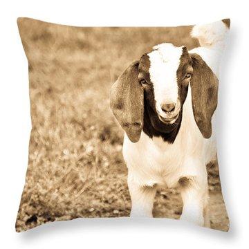 Baby Boer Goat Throw Pillow
