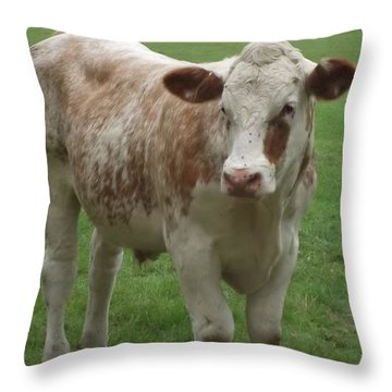 Baby Bull 2 Throw Pillow by John Williams