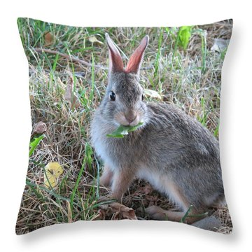 Baby Bunny Eating Dandelion #02 Throw Pillow by Ausra Huntington nee Paulauskaite