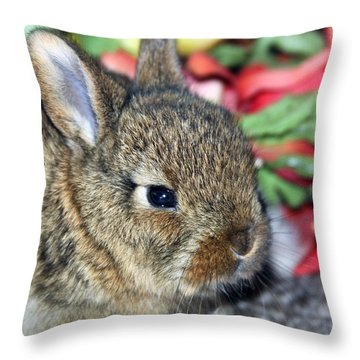 Baby Bunny Rabbit Throw Pillow by Karon Melillo DeVega