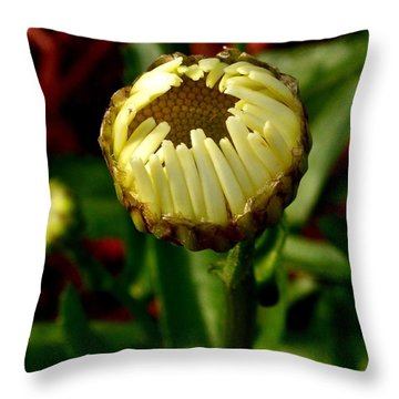 Baby Daisy Throw Pillow