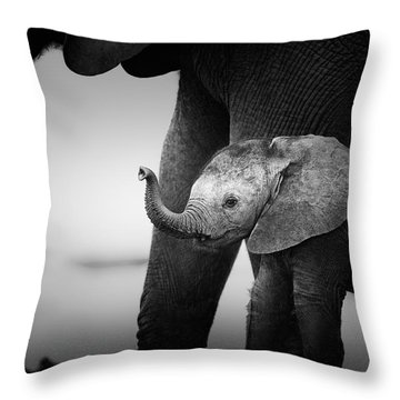 Baby Elephant Next To Cow  Throw Pillow