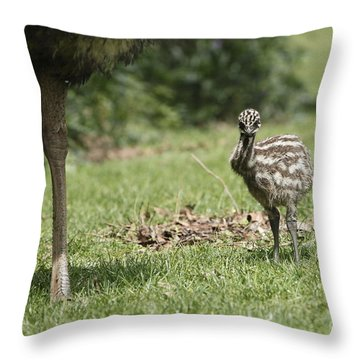 Baby Emu Throw Pillow