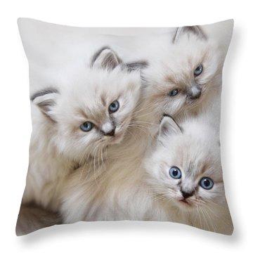 Baby Faces Throw Pillow by Lori Deiter