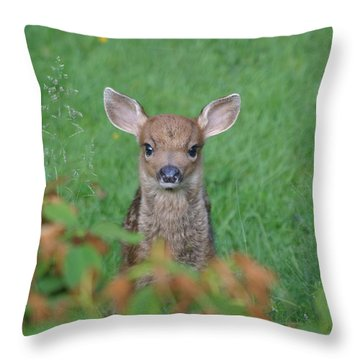 Baby Fawn In Yard Throw Pillow by Kym Backland