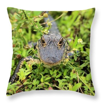 Baby Gator Throw Pillow by Adam Jewell