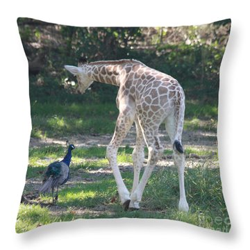 Baby Giraffe And Peacock Out For A Walk Throw Pillow